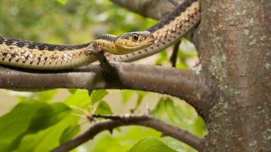 As Cobras Também Têm Amigos