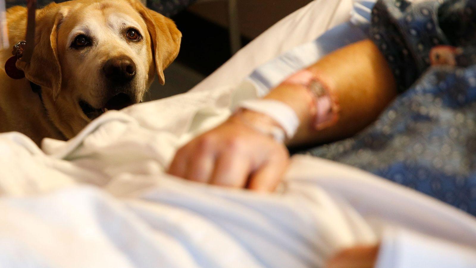 Tucker, um cão terapeuta, visita o seu paciente Jim Cawley.