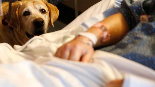 Cães Terapeutas Fazem Milagres. Mas Será que Gostam do Trabalho que Desenvolvem?
