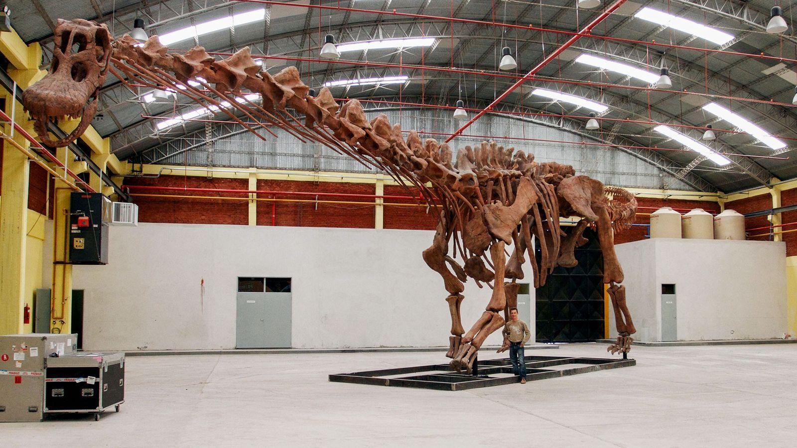 Nova espécie de dinossauro foi o maior animal terrestre de sempre