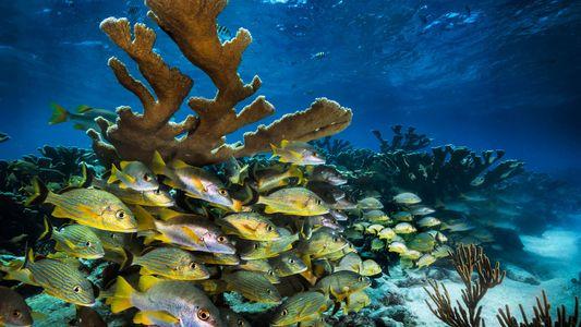 Trump Redefiniu a Política dos Oceanos: Conheça as Implicações