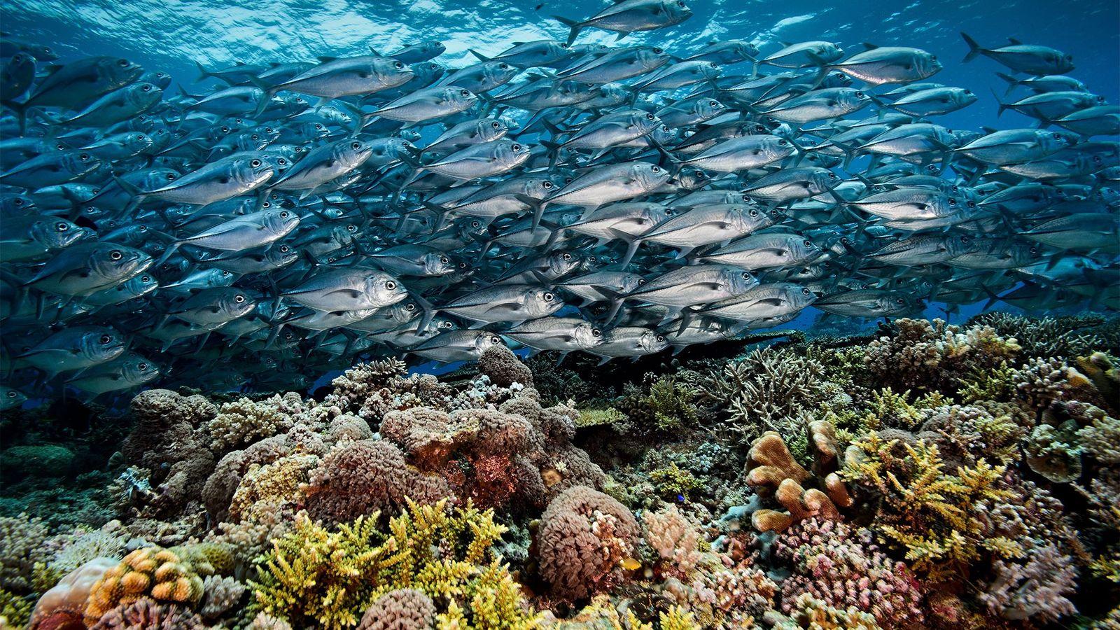 Recife de Coral de Tubbataha