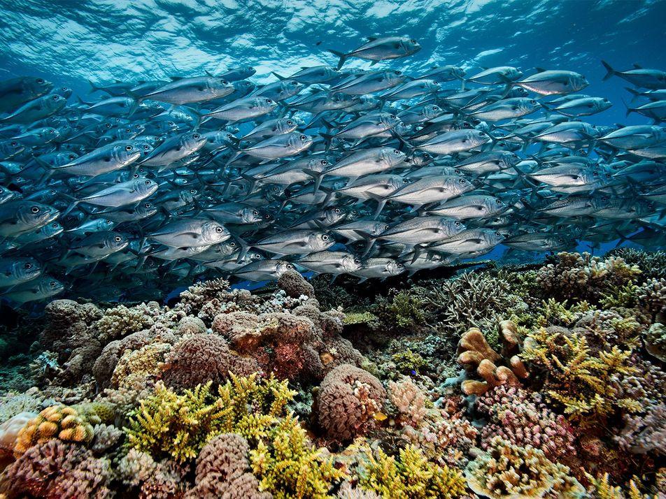 No Coração do Recife de Coral das Filipinas