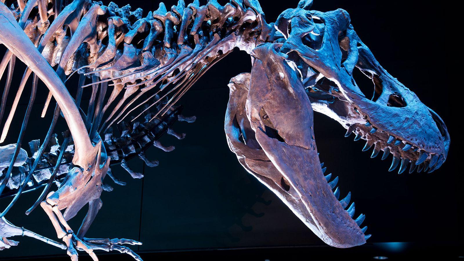 O Tyrannosaurus Rex não era tão rápido quanto se pensava.