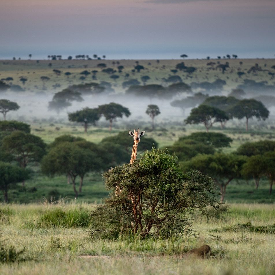 Pandemia Aumenta Caça Furtiva no Uganda