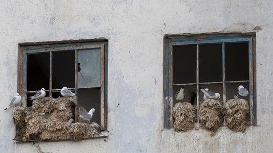 Noruegueses Estão a Construir 'Hotéis' Para Aves do Ártico Ameaçadas