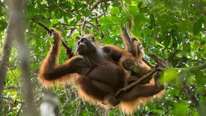 Partida Adiada: Estes Animais Permanecem Com a Progenitora Durante Anos
