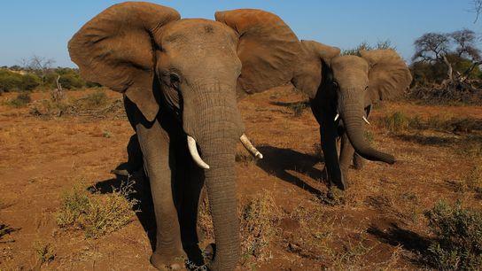 Comércio de Marfim na China