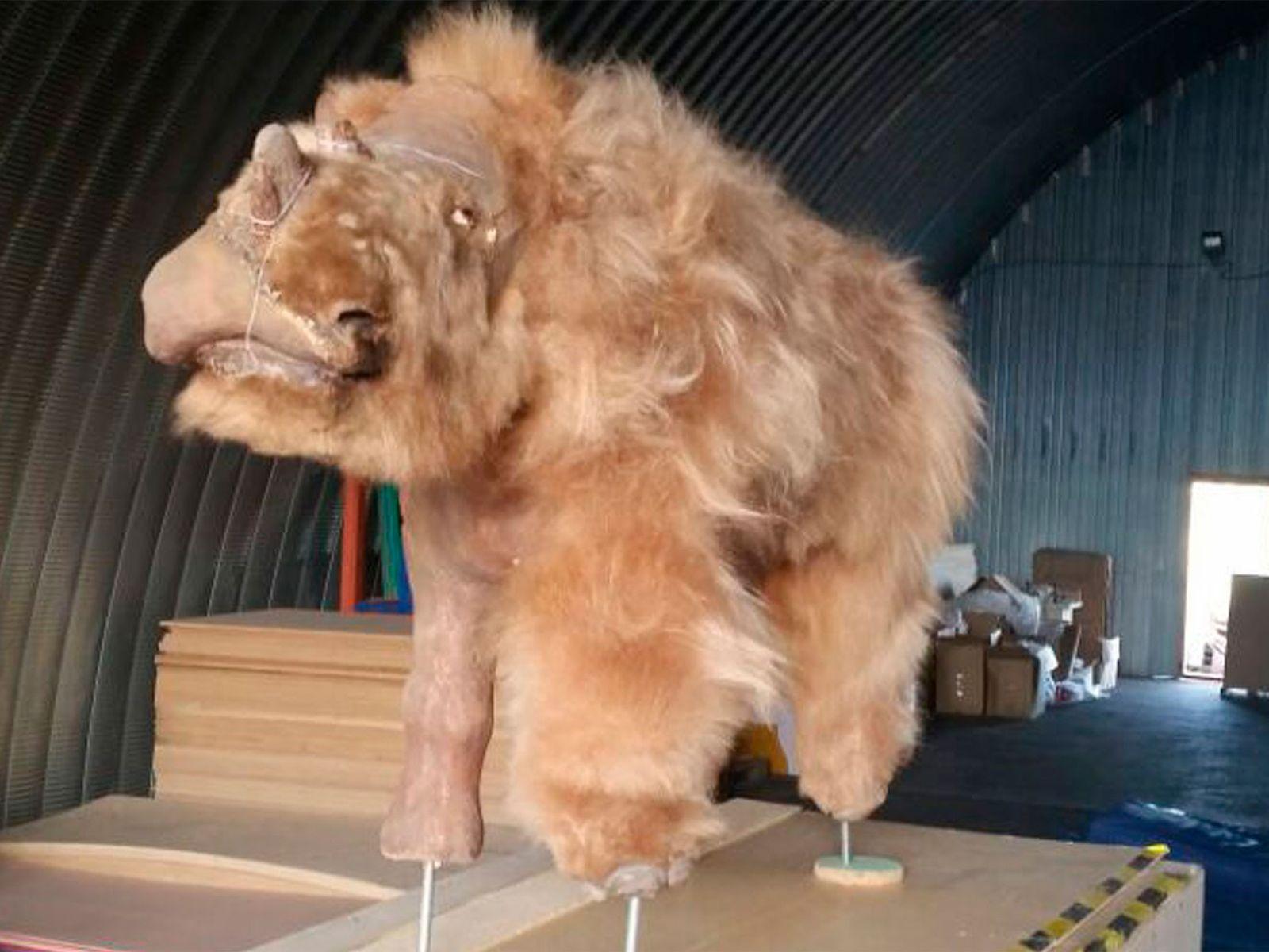 Rinoceronte Lanudo Extinto Reconstruído