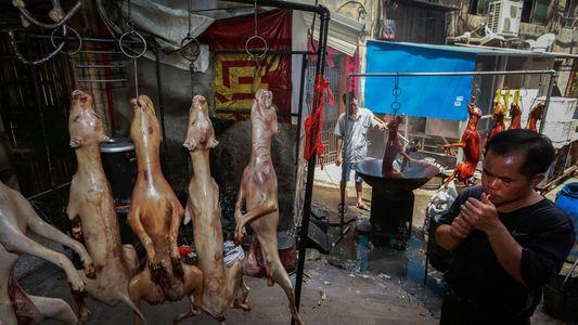 Carne de Cão Continua à Venda em Festival Controverso