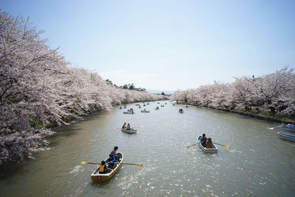 As árvores de cerejeira que revestem as margens do rio Iwaki acrescentam uma profundidade diferente a ...