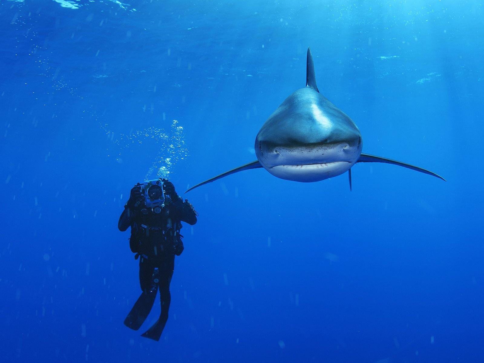Fotografia de um mergulhador ao lado de um tubarão