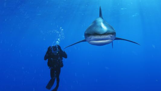 Uma Nova Perspetiva dos Tubarões: Entrevista a Brian Skerry