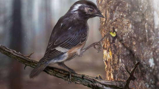 Uma espécie recém-descoberta de enantiornitinos, um grupo extinto de aves da era dos dinossauros, tem três ...