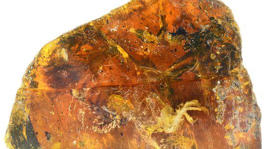 Pássaro do Tempo dos Dinossauros Encontrado Conservado em Âmbar