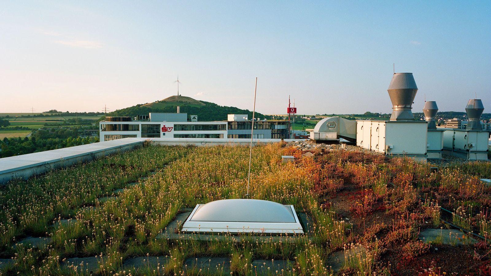 Telhados Verdes Controlam a Temperatura