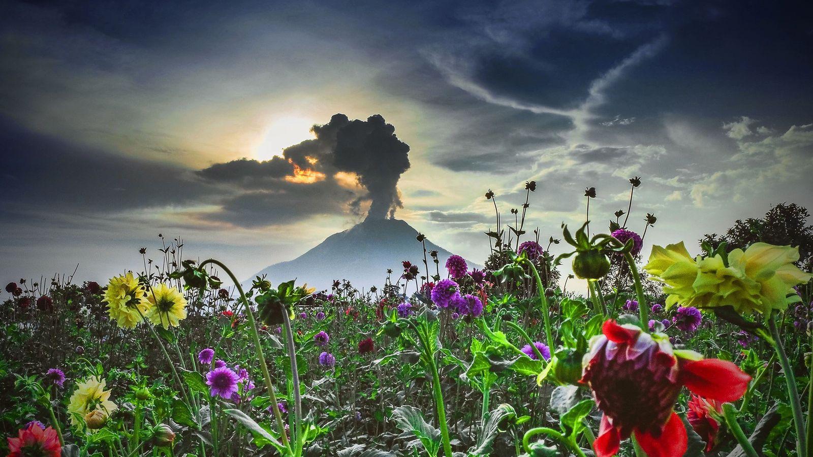 O vulcão Sinabung, no oeste da Indonésia, adormeceu durante cerca de 400 anos, antes de acordar ...