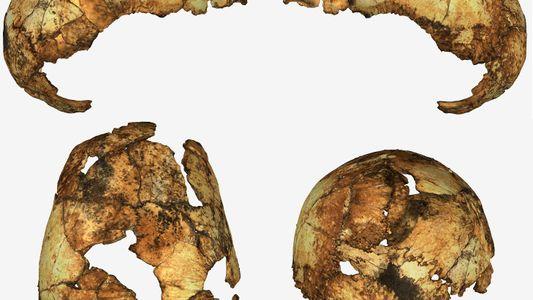 Crânios Fósseis Reescrevem a História de Dois Antepassados Humanos