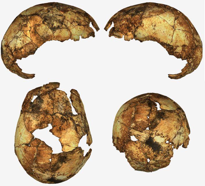 Fragmentos cranianos de um Homo erectus foram descobertos na África do Sul – a primeira vez ...