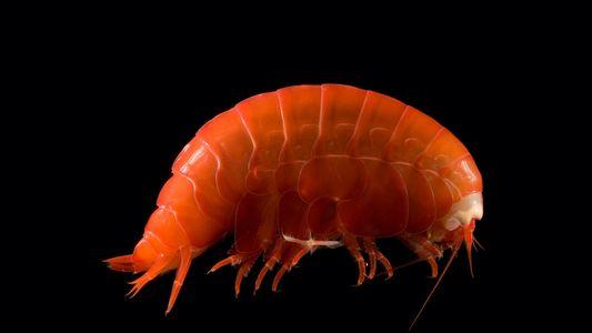 Nas Profundezas do Mar Existem Criaturas Que Se Alimentam de Plástico