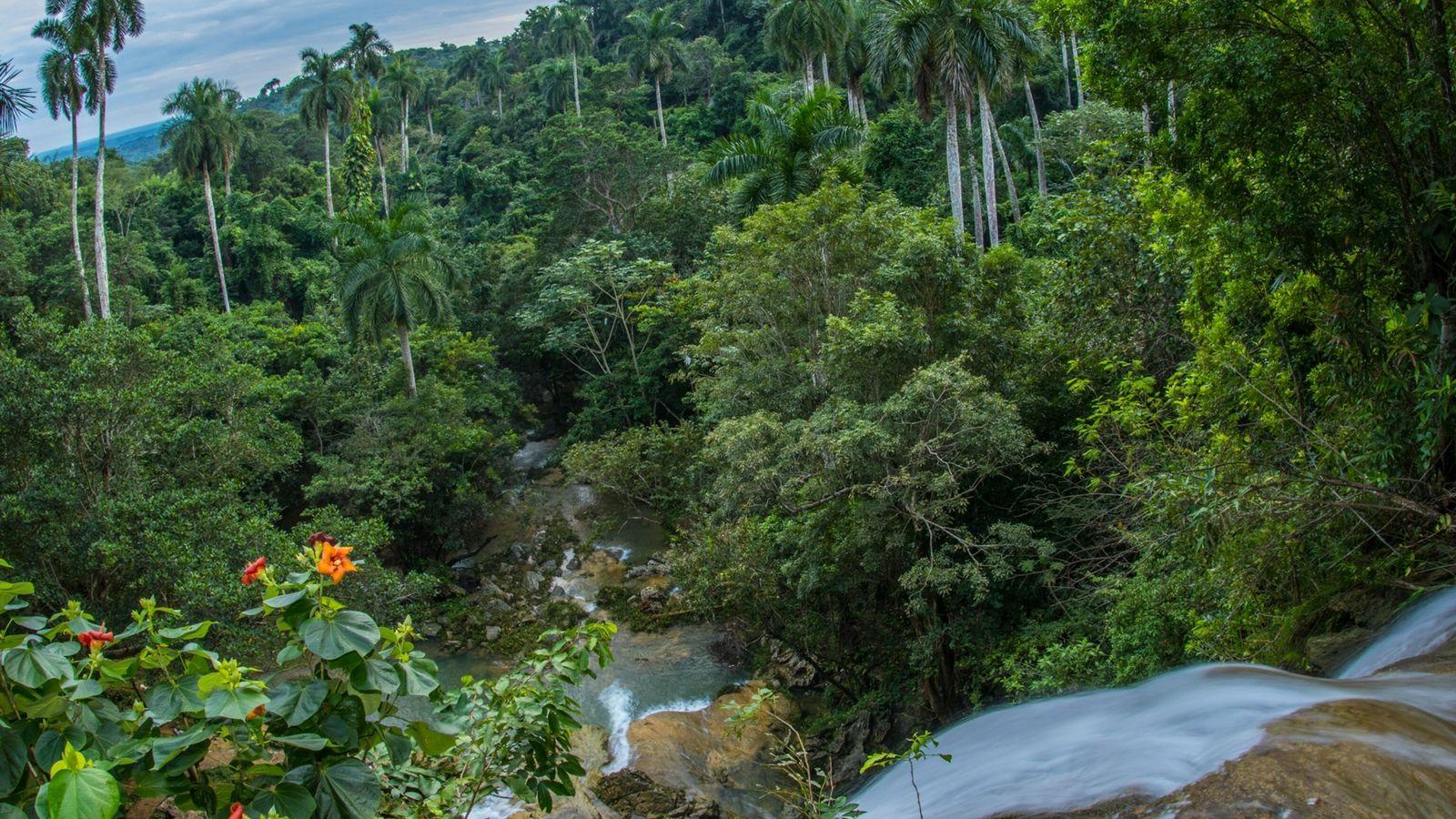 Uma queda de água numa floresta de palmeiras-reais em perigo crítico de extinção em Soroa, Artemisa, ...