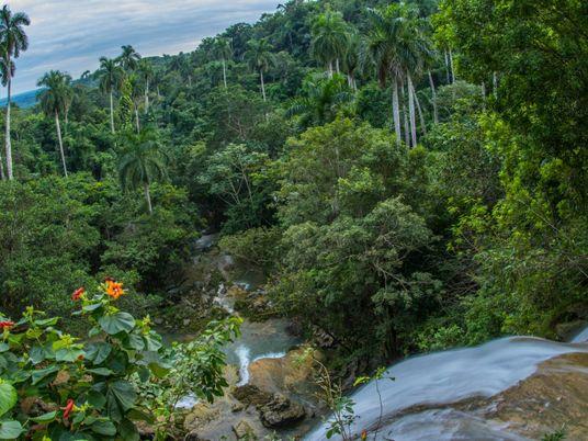Os benefícios ambientais não intencionais do isolamento de Cuba