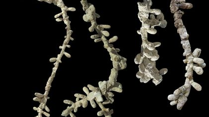 Fósseis Mais Antigos das Abelhas Modernas Encontrados na Argentina