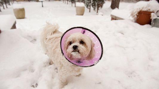Cães – Vítimas Colaterais da Crise de Opioides