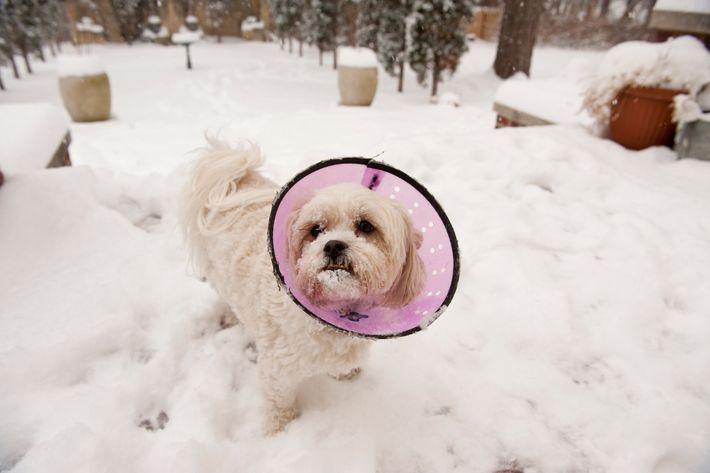 Uma nova sondagem feita a nível nacional nos EUA revela que os cães mais pequenos e ...