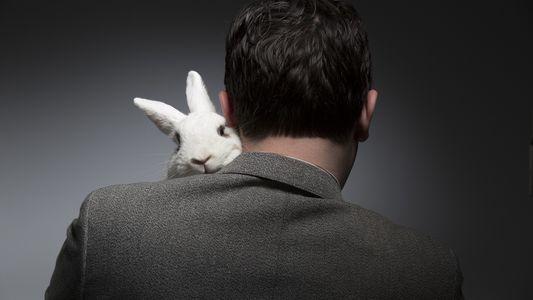 A Páscoa é Má Para os Coelhinhos: Eis a Razão