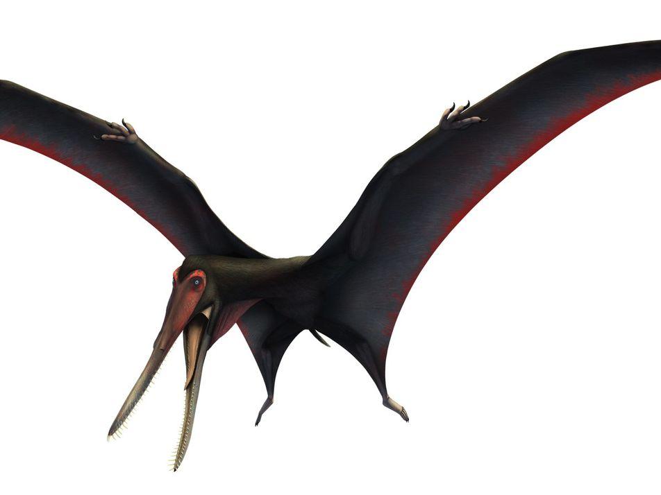 Pterossauro Dentado 'Escondido' no Grupo Errado