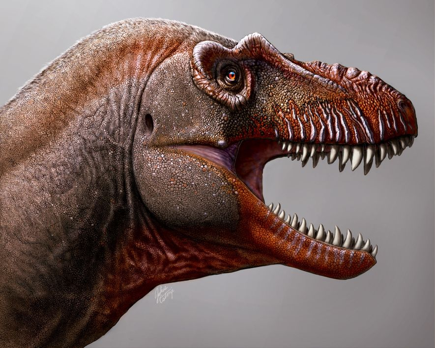 Para as pessoas menos informadas, os tiranossauros podem parecer todos iguais. Mas o 'Thanatotheristes' tem várias ...