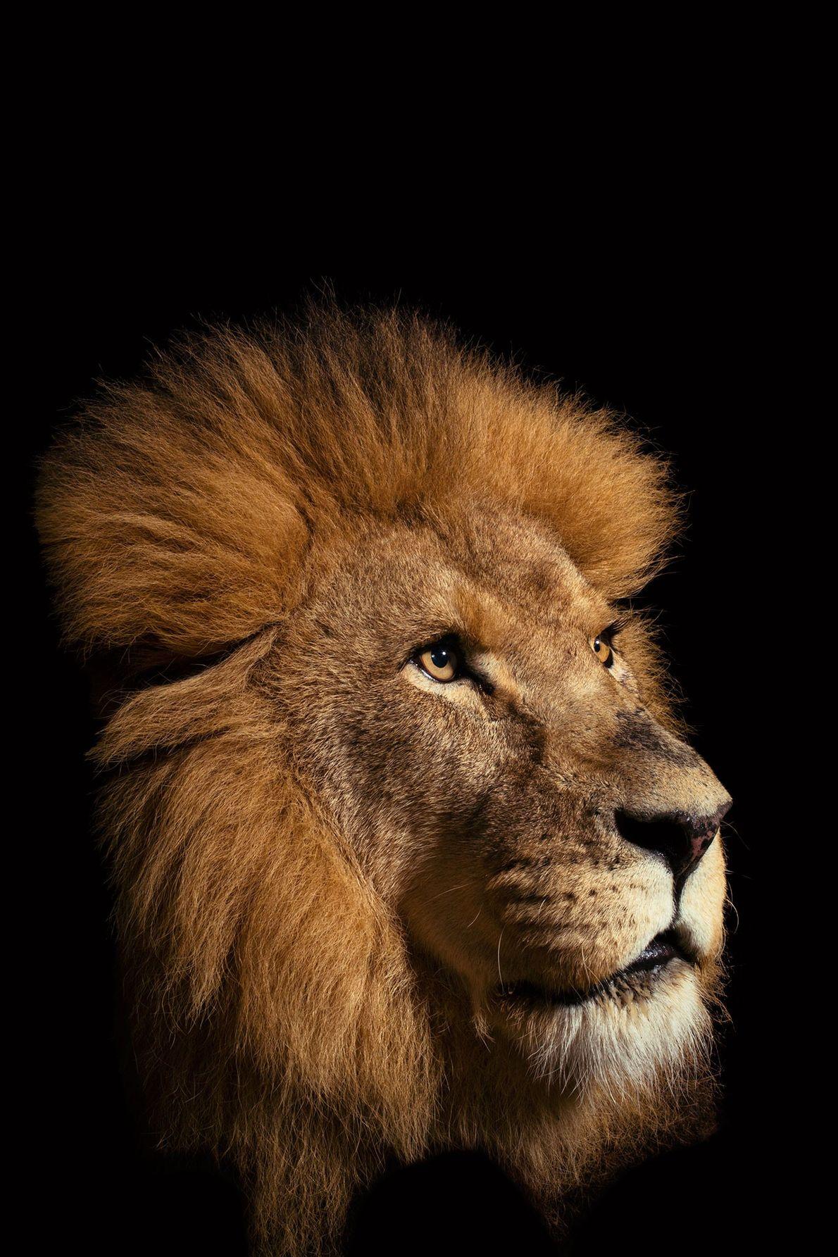 Monarcas da Savana