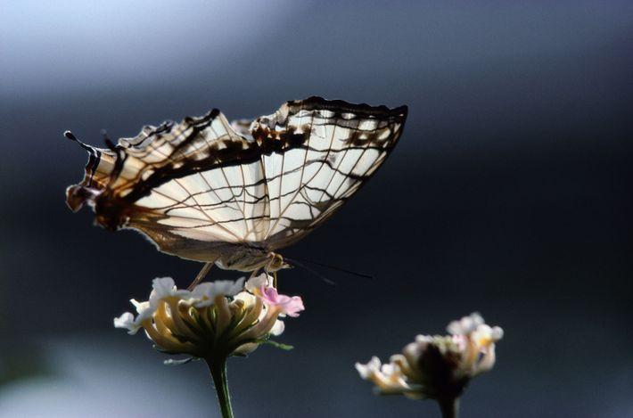 Borboleta numa flor