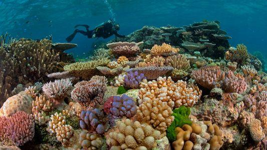 Imagens da Grande Barreira de Coral