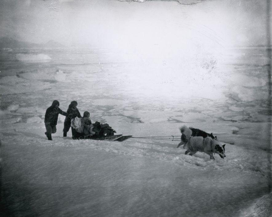 Fotografias Antigas de Cães de Trenó