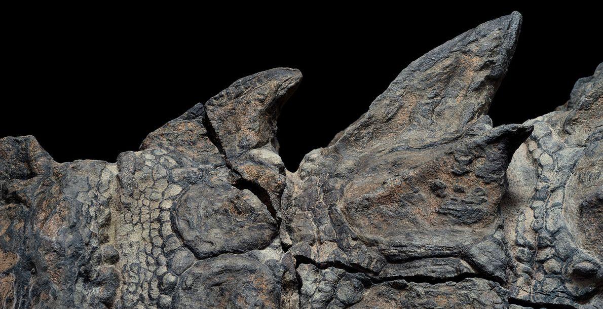 Nodossauro