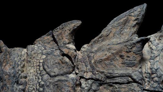 Nodossauro - O Fóssil De Dinossauro Mais Impressionante Alguma Vez Encontrado