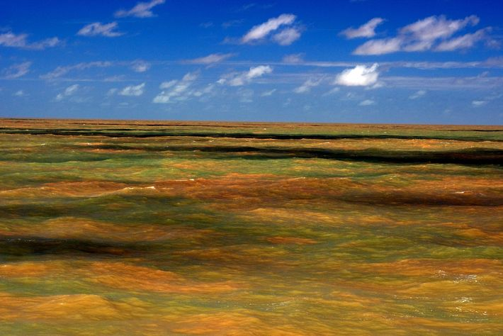 02-recife-amazona-descoberto