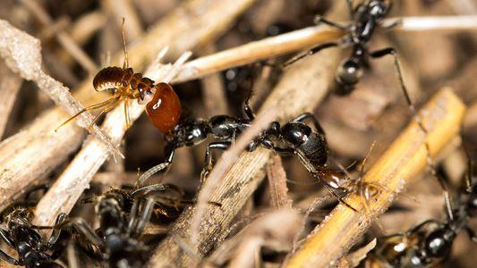 Fotografias de Formigas