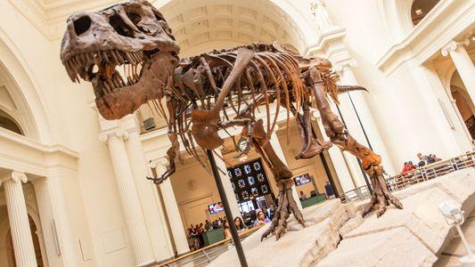 Os Pequenos Braços do Tiranossauro Rex São Afinal Um Sinal de Força