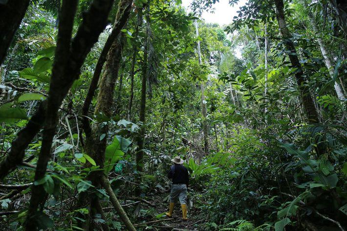 No Equador, cientistas procuram parentes selvagens de batatas, beringela, arroz e batata doce.