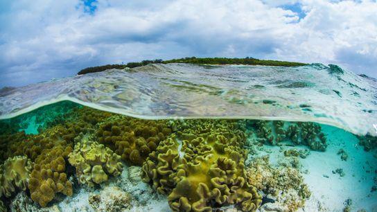 Banco de Esperma de Coral Criado Para Salvar os Recifes