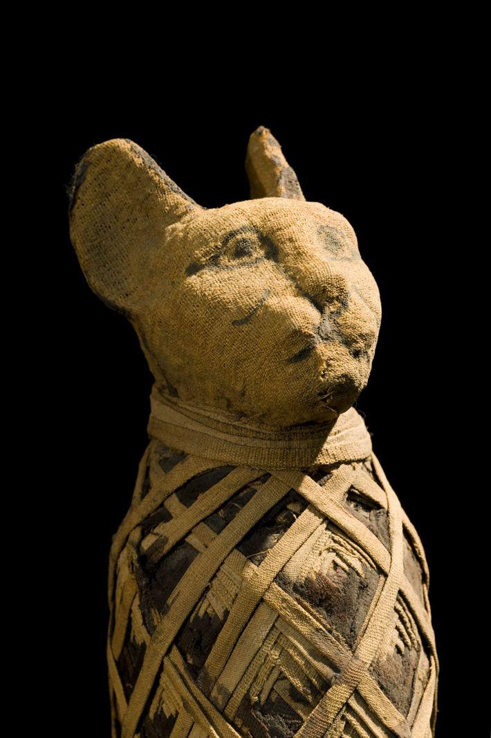 Múmia de um gato egípcio