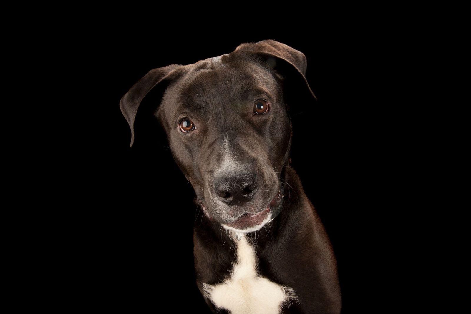 10 Fotografias dos Cães que nos Fazem Companhia