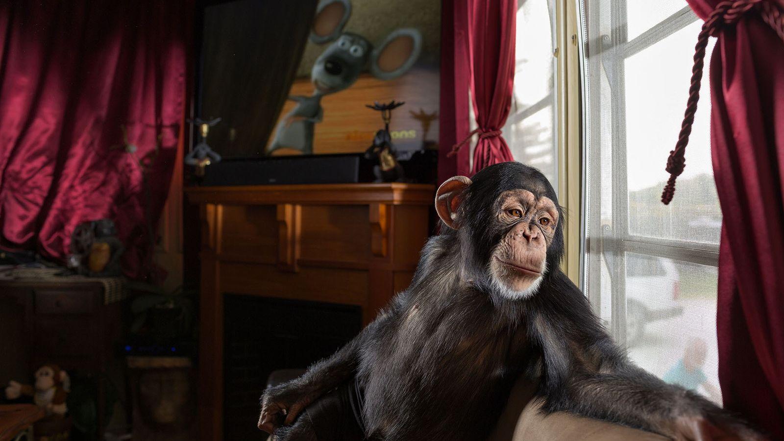 Pamela Rosaire Zoppe, treinadora de animais na Flórida, comprou Chance a pessoas que já não o ...