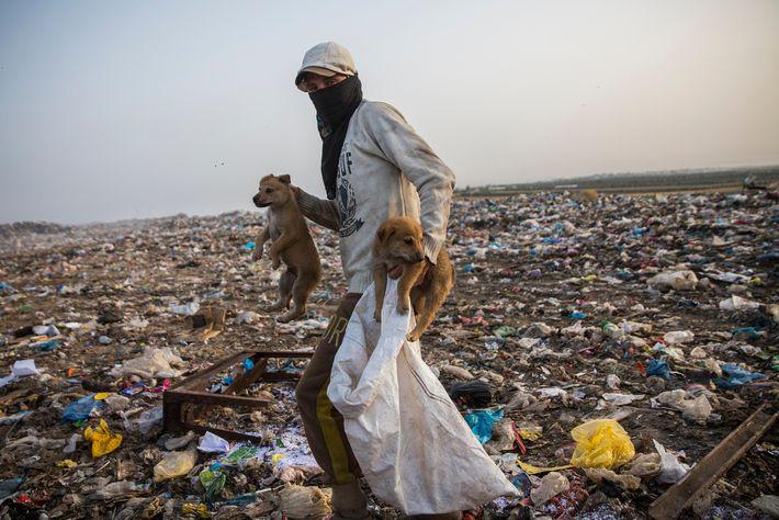 No aterro de Juhor al-Deek, um jovem palestiniano segura dois cães enquanto procura por itens.