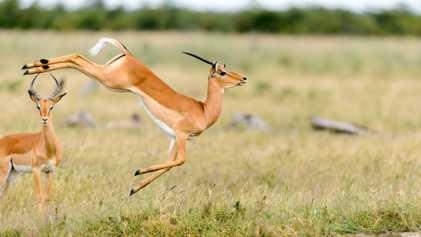 Fotografias Incríveis de Animais a Saltar