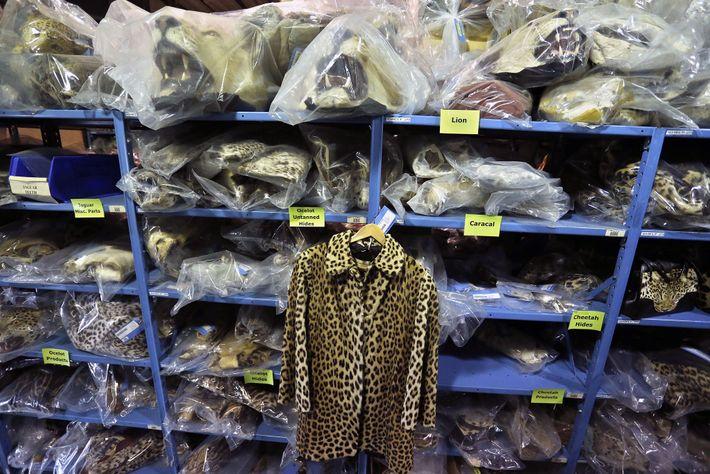 Um casaco de pelede leopardo apreendido pelas autoridades está pendurado em prateleiras que estão repletas de ...