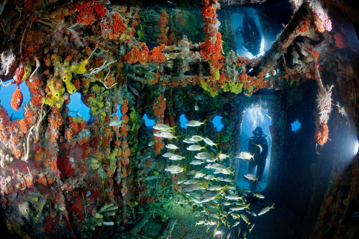 Santuário Submerso